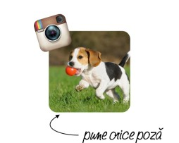 magnet instagram